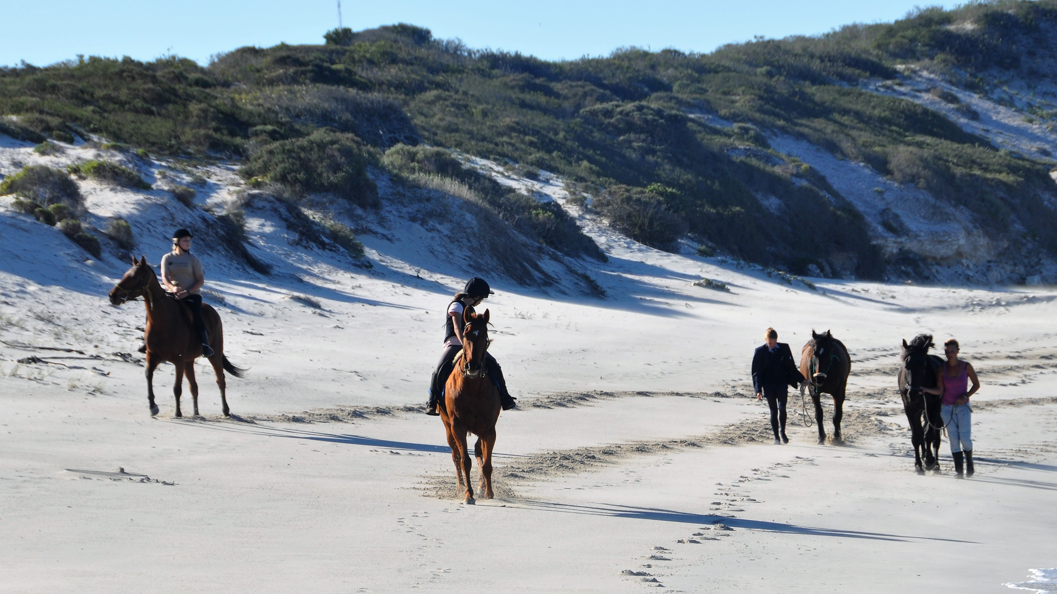 Beach Horse 2